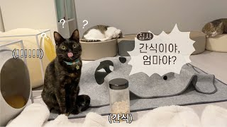 [Eng sub]I asked the Cat a question. (Who do you like better, snack and me?)