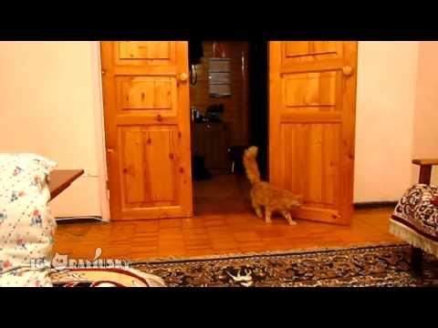 0 O Gato que tem medo do pulo do Mário