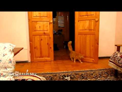 This Cat Will Make You Split Your Sides With Laughter!