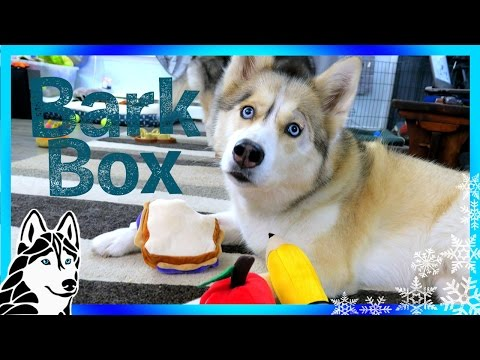 HUSKIES BACK TO SCHOOL BarkBox UnBoxing