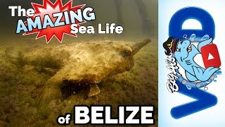 The Amazing Sea Life of Belize! | Big Al's Does Belize
