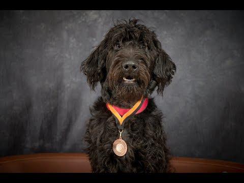 Taffy - Labradoodle - 2 Weeks Residential Dog Training
