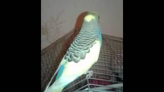 Говорящий Попугай Геша