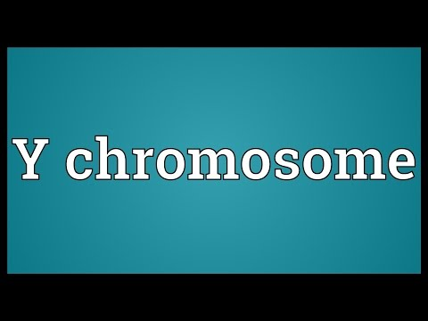 Y chromosome Meaning