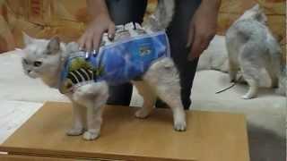 Послеоперационная попона для собак, кошек на ZooStar