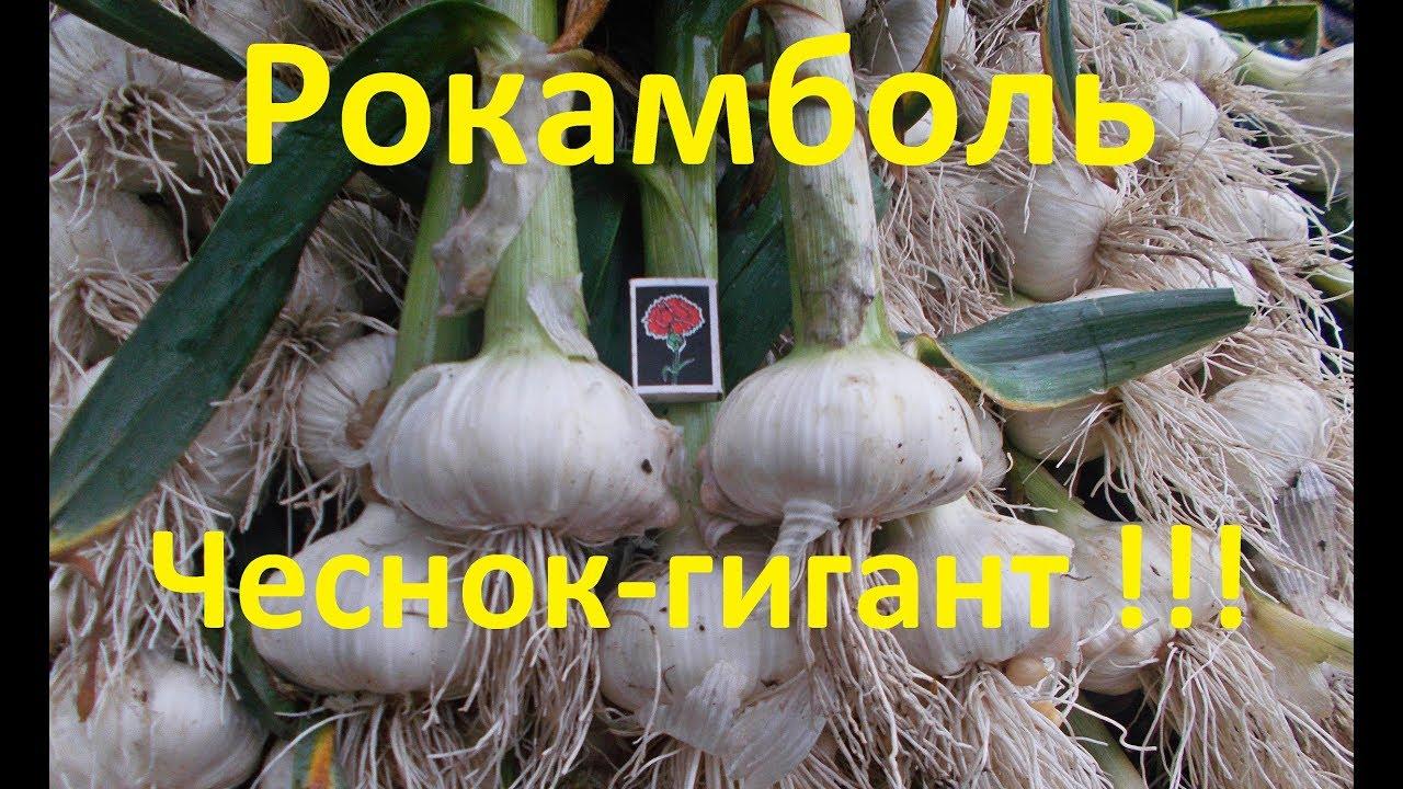 сажалка для лука и чеснока и семян ручная своими руками - YouTube