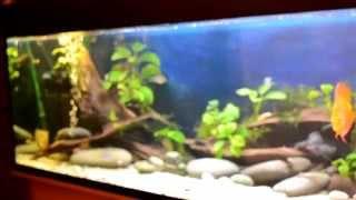 Интерактивный аквариумный туризм №14(Рубрика, куда вы присылаете свое видео и описание аквариума, а мы делаем из этого выпуск. Тема для Заявок:..., 2014-11-26T19:46:07.000Z)