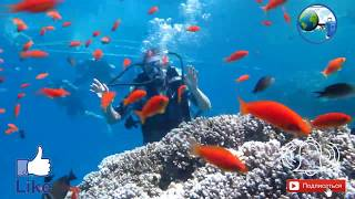 Sea Beach Aqua Park 42020 Отдых в Шарм ель шейхе Обзор отеля Дайвинг Влог