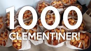 vlogg: RÅKAR KÖPA 1000 CLEMENTINER