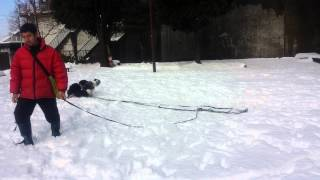 関東にも大雪が降ったので近所の公園で思い切り遊んでみました.