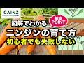 カインズ野菜図鑑 ニンジンの育て方 の動画、YouTube動画。