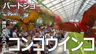 神戸市中央区『神戸どうぶつ王国』 真っ赤なベニコンゴウインコと、黄色...