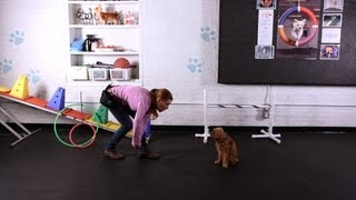Teach Dog to Jump through Arms, Pt. 2 | Dog Tricks
