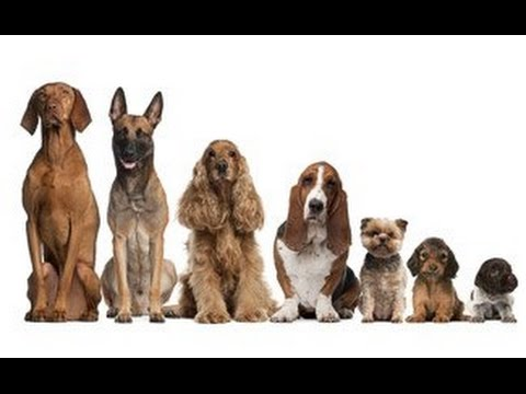 Dog Names- 101 cute Male Dog Names for all country