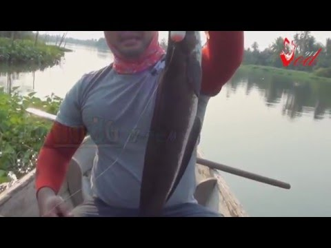ตกปลาช่อนแม่น้ำท่าจีน