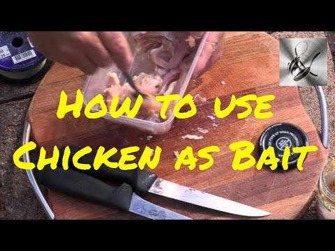 How To Use Chicken As Bait | The Hook And The Cook