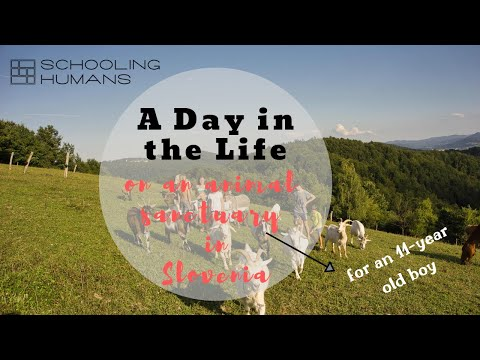 A Day in the Life - Lev (Slovenia)   Schooling Humans