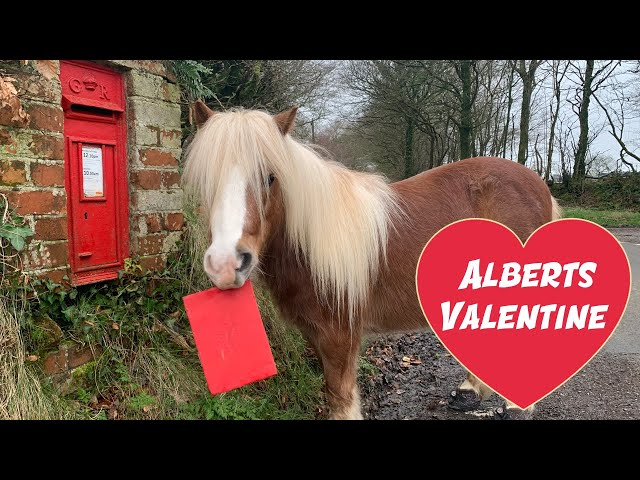 My Pony found LOVE this VALENTINE! | Funny Video | Cute Animals | Albert & Ernie