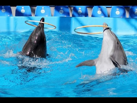 Dolphin Playing | Bottlenose Dolphin Playing Compilation - Dolphins Dance