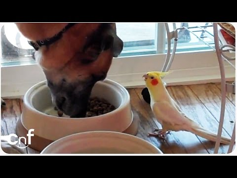 Bird Sings to Dog During Lunch | Meal Time Serenade