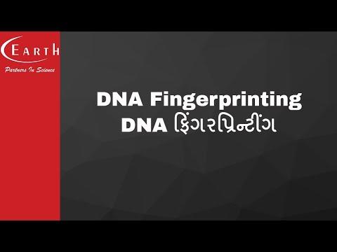 DNA Fingerprinting | DNA ફિંગરપ્રિન્ટીંગ | Molecular Basis of Inheritance | 12th science biology