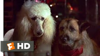 Look Who's Talking Now (1993) - Lady and the Tramp Scene (8/10)   Movieclips