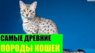 Самые древние породы кошек