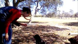 Teaching A Puppy 5 Basic Commands