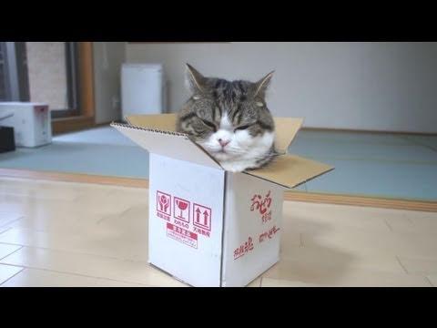 箱とねこ8。-A box and Maru 8.-