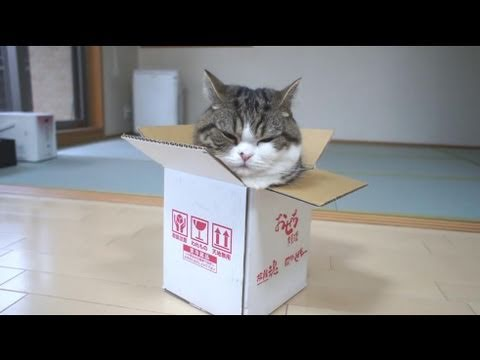 「cat inside a box」の画像検索結果