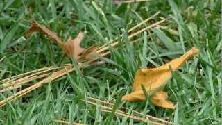 Garden Tips for November