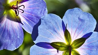 Morning Relaxing Music - Piano Music, Guitar Music for Positive Energy (Sarah)