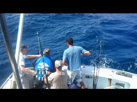 BIG Dolphin Fish 20-25kg, Sydney Deep Sea Fishing Plus Black Marlin Pic's. 45km out