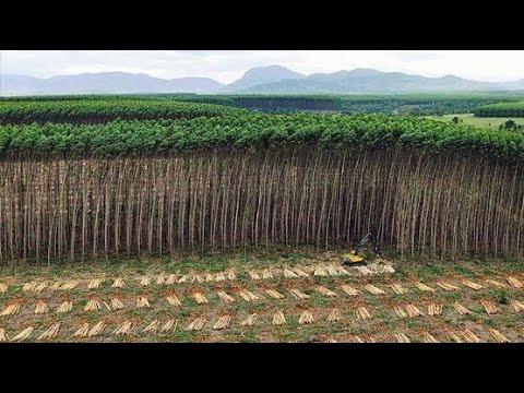 ¿que-son-los-monocultivos?- -¿solución-alimenticia-o-catástrofe-ambiental?🥑