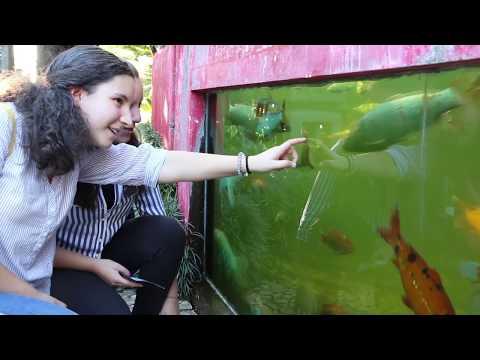 '+ Criatividade' proporciona visita guiada ao Jardim Tropical Monte Palace [Vídeo]