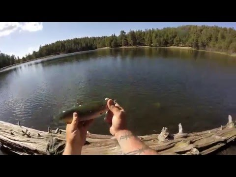 Riggs Flat Lake | Arizona | Trout Fishing