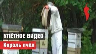 «Улётное видео». Король пчёл(Тем, кто боится пчел, просмотр запрещен -- мы предупредили! КРУТЬ или МУТЬ? Голосуй на http://peretz.ru/s/skkLPKpU Peretzcam(пе..., 2014-07-16T10:38:03.000Z)