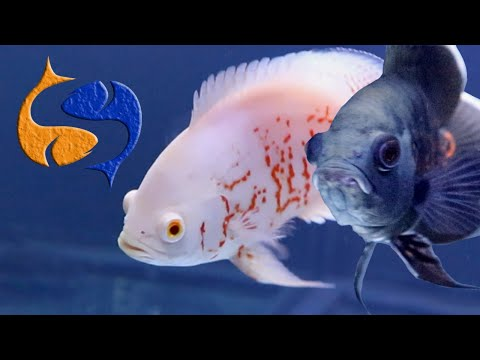 The Coolest Fish In The Aquarium Hobby!