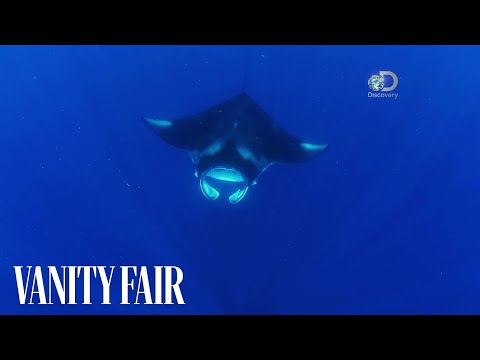 Racing Extinction Exclusive Clip: A Connection Between a Manta Ray and a Man