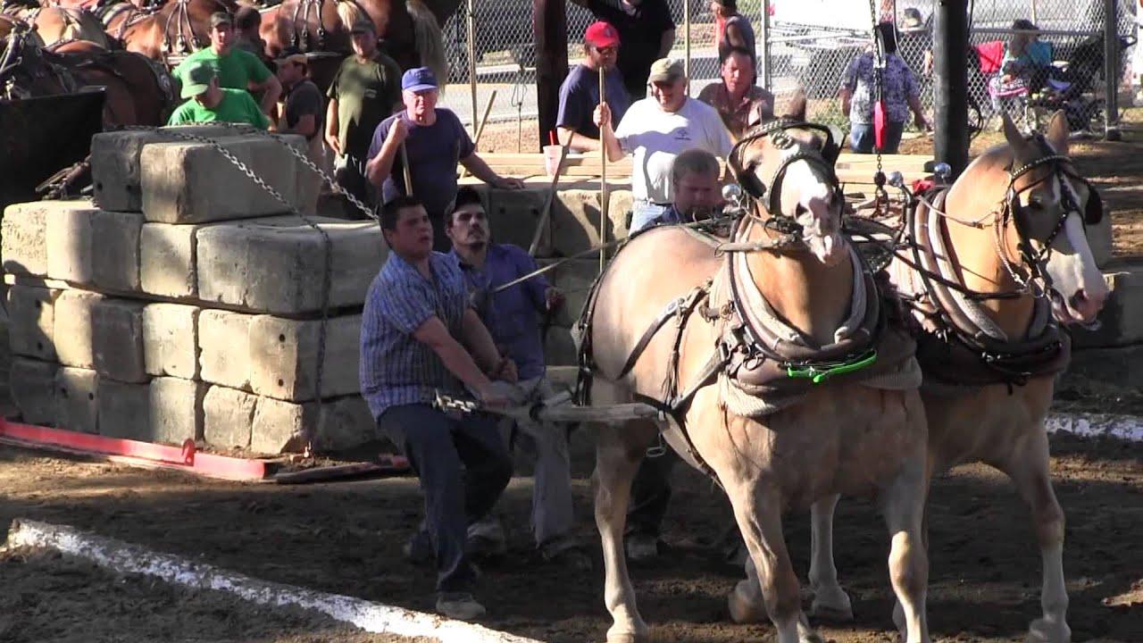 Download Draft Horse Pull 2013 Deerfield Fair NH Pulling Video 8