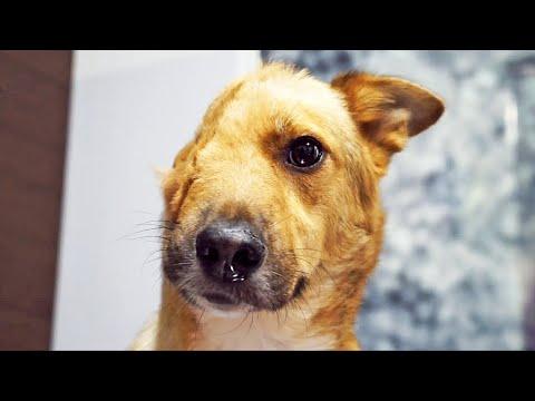 El perro que perdió media cara - La increíble recuperación de SKY