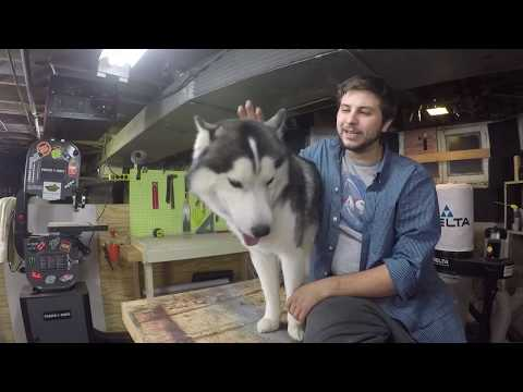Husky argues with my cats!