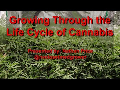 Growing Through the Life Cycle of Cannabis - AUDIO FIXED - Grow Class at Hydro Suite Hydroponics