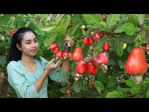 Red cashew fruits in my home land  how to make red cashew fruits salad