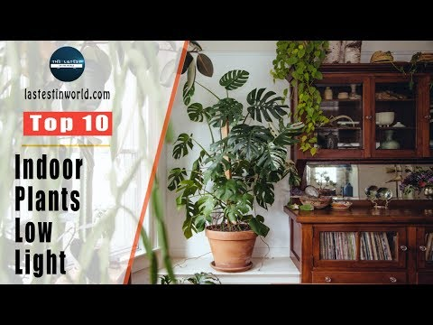 Top 10 Indoor Plants For Low Light