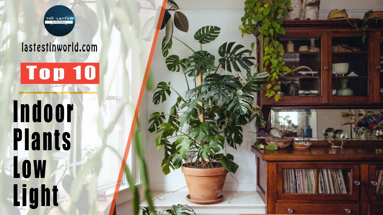 Indoor Plants For Low Light Top 10 Indoor Plants For Low Light