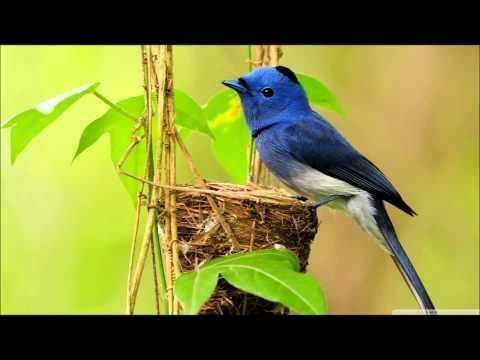 Wiskim-Bluebird