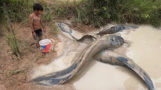 Fish catching by a boy in the dry season - Finding the true fish is very large