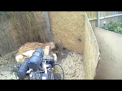 Rayco rg25 bedfordshire stump grinding