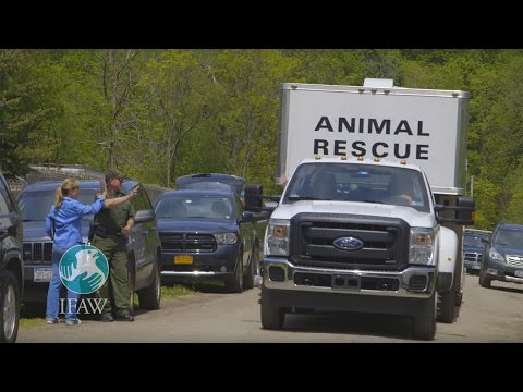 IFAW Keeps on Trucking With Our Animal Rescue Vehicles